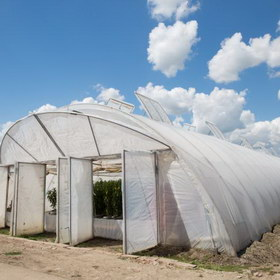 Greenhouse covering films